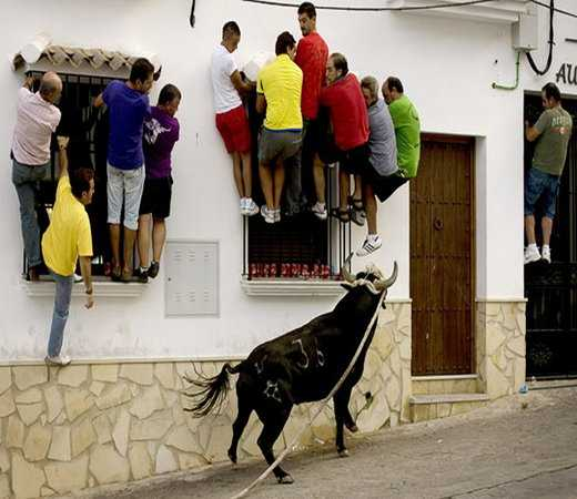 people and cow