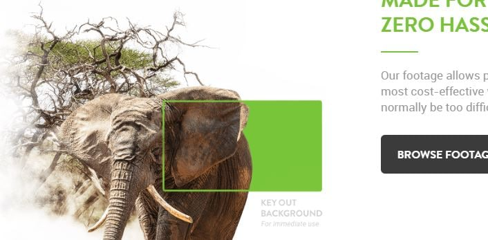 Green Screen Animals