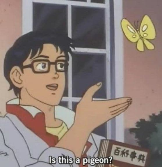 Is this a pigeon