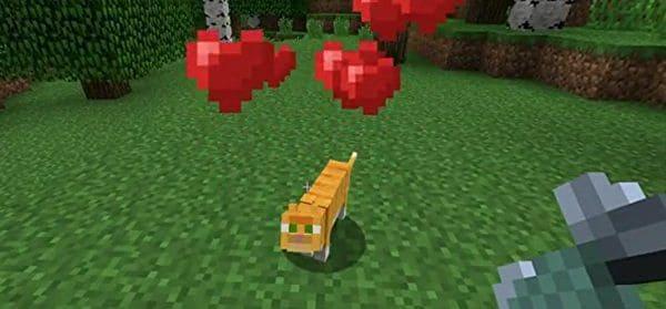 cat-following-me
