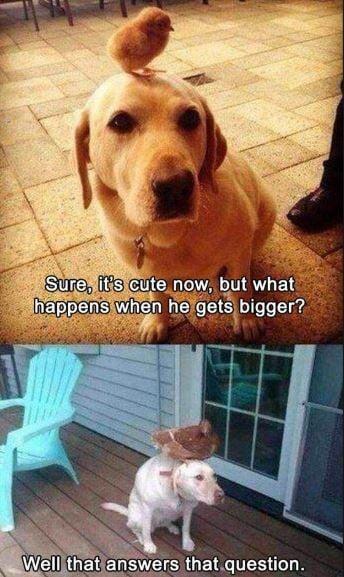 25 Cute Memes to Make You Feel Better