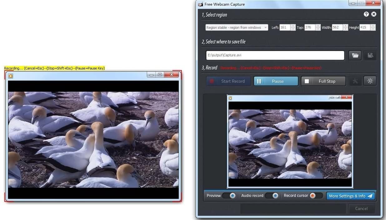 Free Webcam Capture