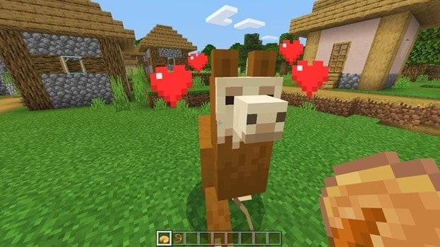 how-to-feed-tamed-llamas