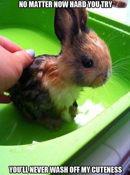 You will never wash off my cuteness