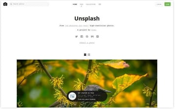 websites-unsplash