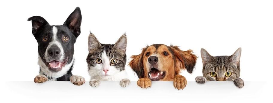 宠物产品设计