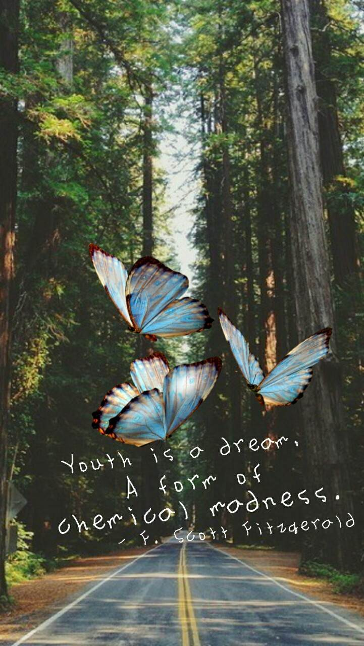 Hottest iphone wallpapers on tumblr-butterfly
