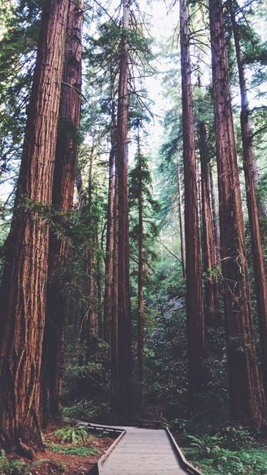 Hottest iphone wallpapers on tumblr-forest walk