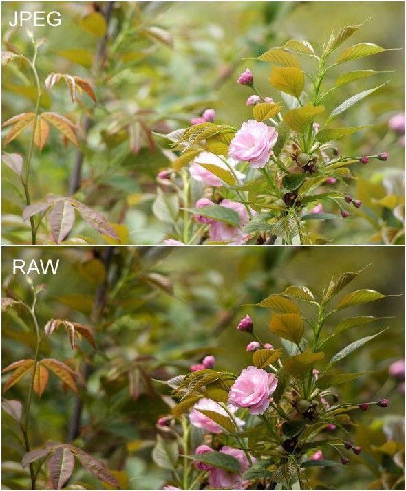 raw and jpg