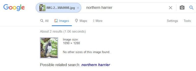 Google Image Search on Desktop Results