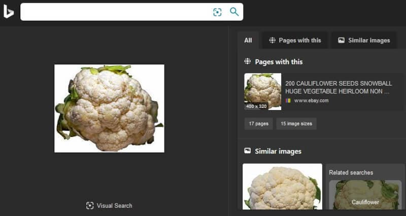 Bing Visual Search Results