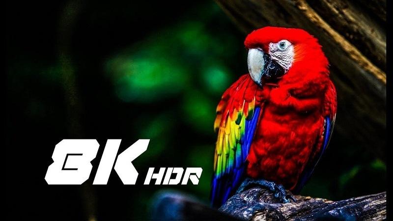8K Video Camera Banner