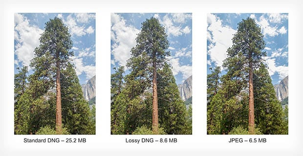 DNG and JPEG Comparison