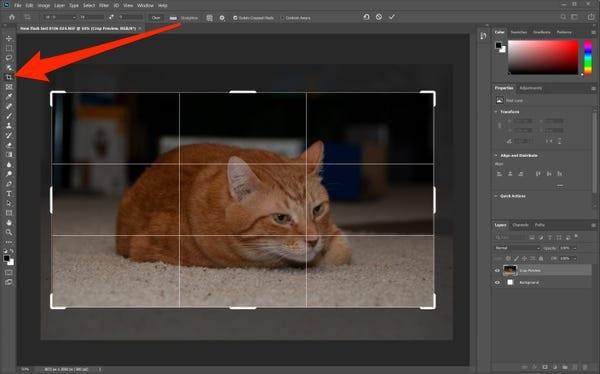 Crop Photos on Photoshop