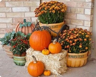 Harvest Corner