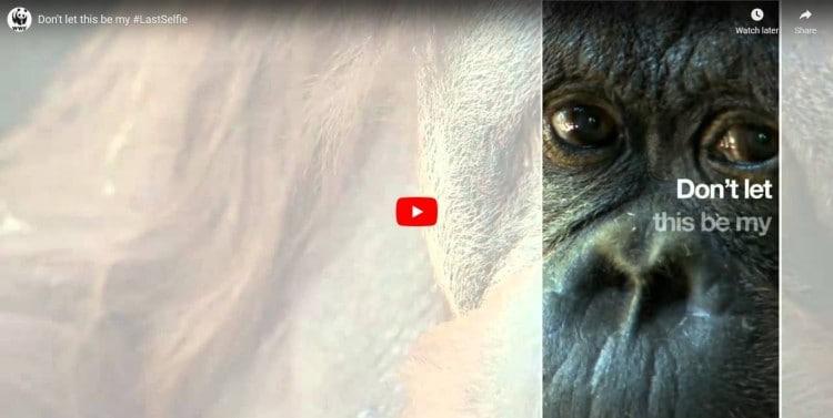 world wildlife fund snapchat video ad